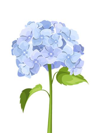 青いアジサイの花。ベクトル イラスト。