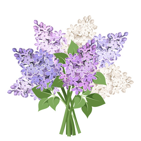 lilac: Bouquet of purple and white lilac flowers. Vector illustration.
