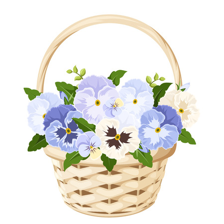 pansy: Basket with blue and white pansy flowers. Vector illustration.