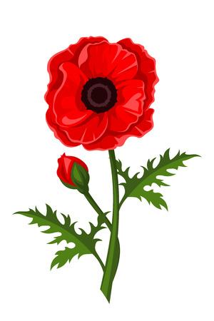 Red poppy. Vector illustration.