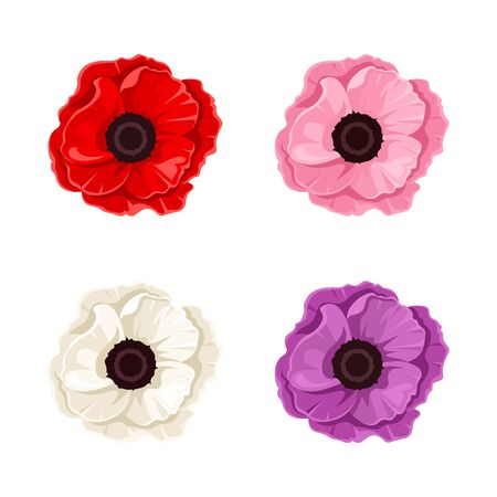 poppies: Four colorful poppies. Vector illustration.