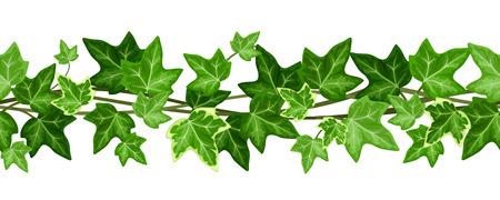 hojas parra: Guirnalda incons�til horizontal con hojas de hiedra. Ilustraci�n del vector.
