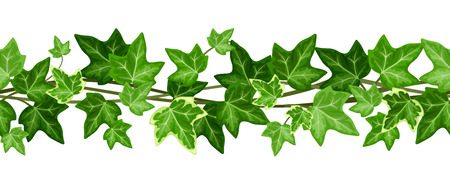 leaf line: Horizontal seamless garland with ivy leaves. Vector illustration.