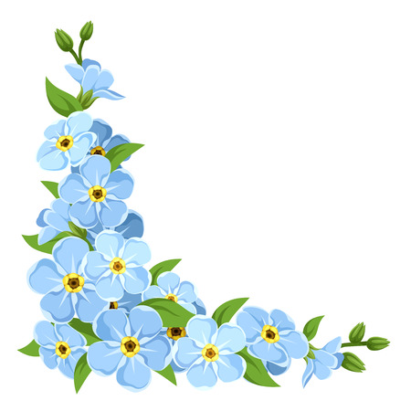 blue and green: Vector corner with blue forget-me-not flowers on a white background. Illustration
