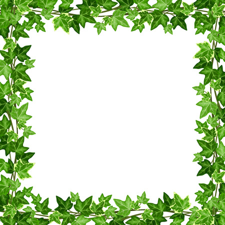 Vector frame met groene klimop bladeren op een witte achtergrond.