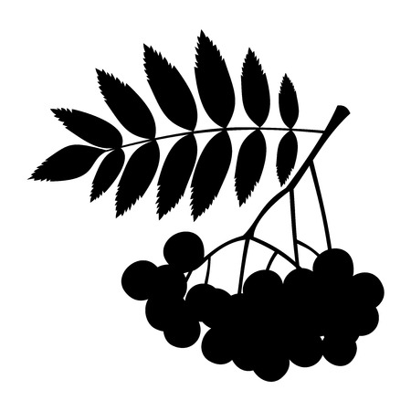 raceme: black silhouette of a rowan branch with berries and leaves