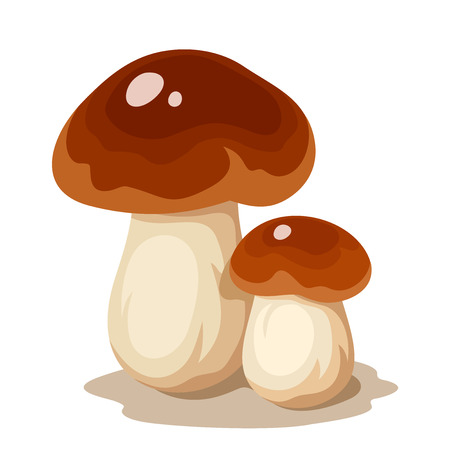 Vector illustration of two cep mushrooms porcini isolated on a white background. Illustration