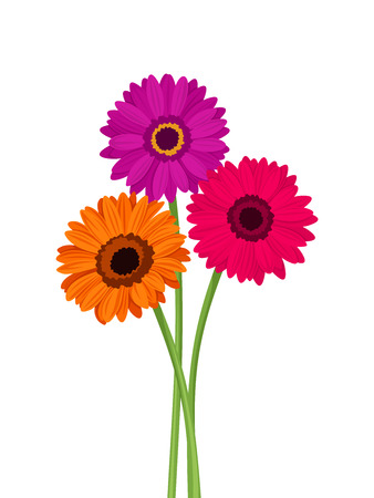 Vector pink, orange and purple gerbera flowers with stems isolated on a white background.