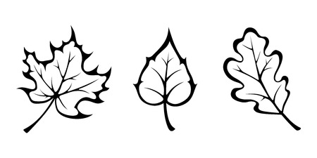 three leaves: Vector black contours of autumn maple, oak and birch leaves isolated on white.