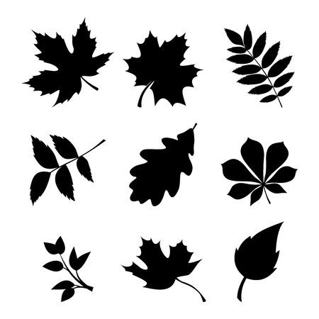 Conjunto de vetores de silhuetas negras de folhas em um fundo branco.