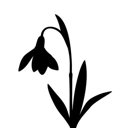 スノー ドロップの花白い背景で隔離の黒いベクター シルエット。