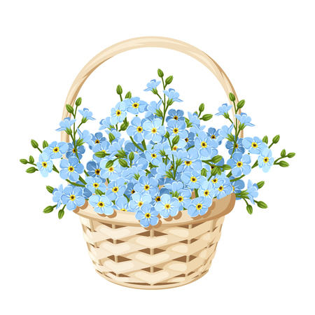 bouquet: Vector beige wicker basket with blue forget-me-not flowers. Illustration