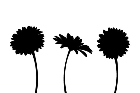 Vector set of three gerbera flowers with stems isolated on a white background.