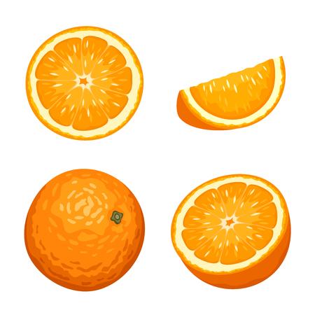 Vector illustratie van hele en gesneden oranje vruchten die op een witte achtergrond.