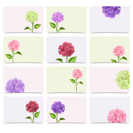 maroon: Vector set of greeting cards with pink, maroon, purple and green hydrangea flowers. Illustration
