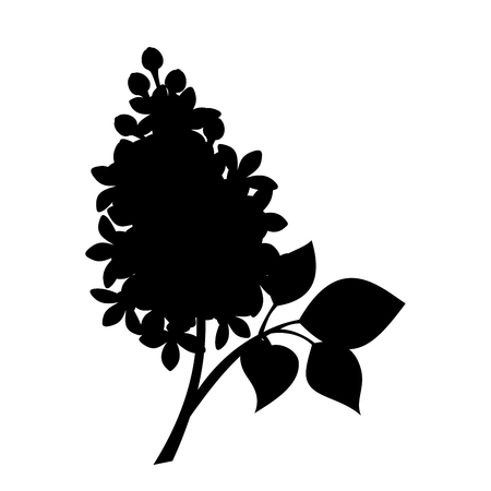 black branch: Vector black silhouette of branch of lilac flowers isolated on a white background. Illustration