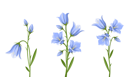 set of blue bluebell flowers isolated on a white background.