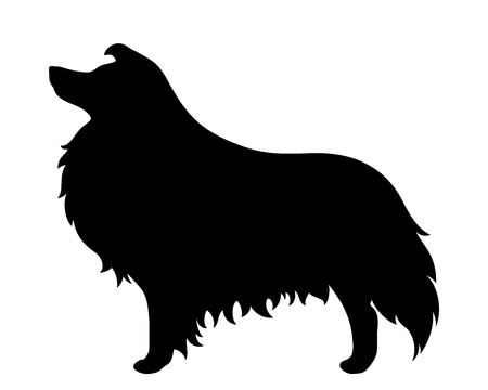 collie: Vector black silhouette of a collie dog isolated on a white background.