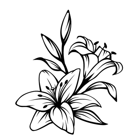 in bloom: Vector black contour of lily flowers isolated on a white background.