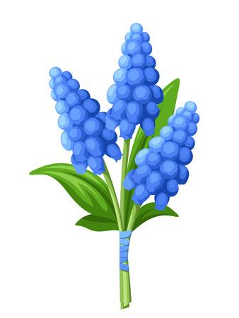흰색 배경에 고립 된 블루 포도 앵 꽃의 벡터 꽃다발.
