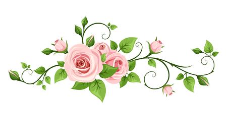 ramo de flores: rosa rosa aisladas sobre un fondo blanco. Vectores