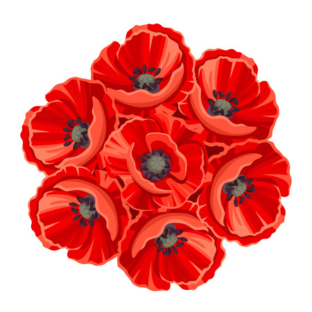 ramo de flores de amapola roja aislados sobre un fondo blanco. Ilustración de vector