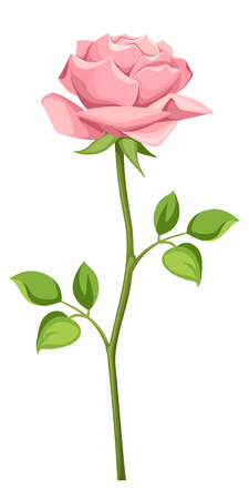 rose stem: Vector pink rose with stem isolated on a white background. Illustration