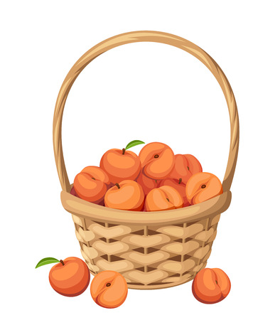 peach: Vector woven basket with peach fruit isolated on a white background. Illustration