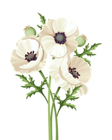 Vector bouquet of white poppy flowers isolated on a white background.