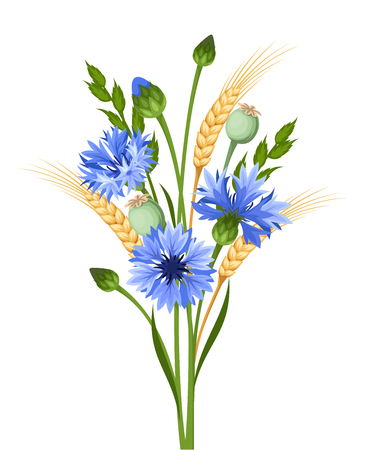 wheat isolated: Vector bouquet of blue cornflowers and ears of wheat isolated on a white background. Illustration