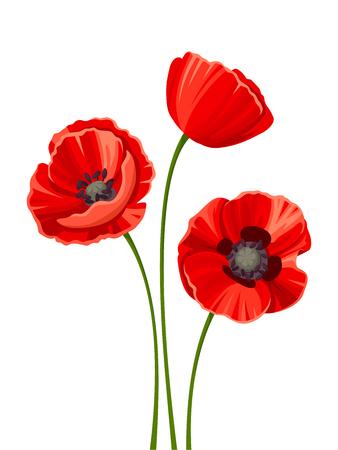 poppy: Vector de tres amapolas rojas con tallos aislados en un fondo blanco.