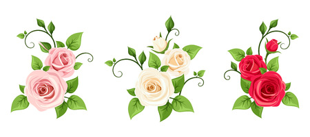 Set of three vector red, pink and white roses branches isolated on a white background.