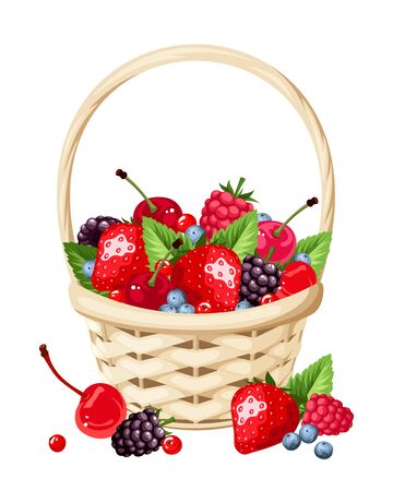 fruit basket: Vector woven basket with strawberries, raspberries, cherries, blackberries and blueberries isolated on a white background.