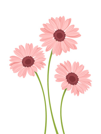 Three vector pink gerbera flowers with stems isolated on a white background. Illustration