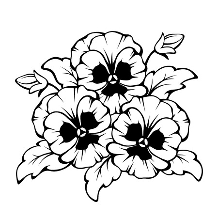 violet: Vector black contour of pansy flowers isolated on a white background.