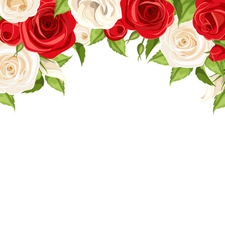 Vector background with red and white roses and green leaves.