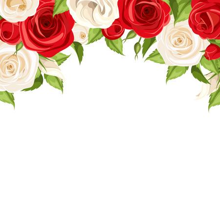Vector achtergrond met rode en witte rozen en groene bladeren.