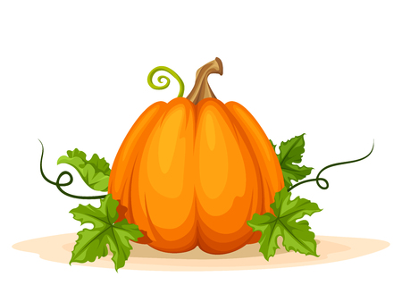 fruit stem: Vector orange pumpkin with green leaves isolated on a white background.