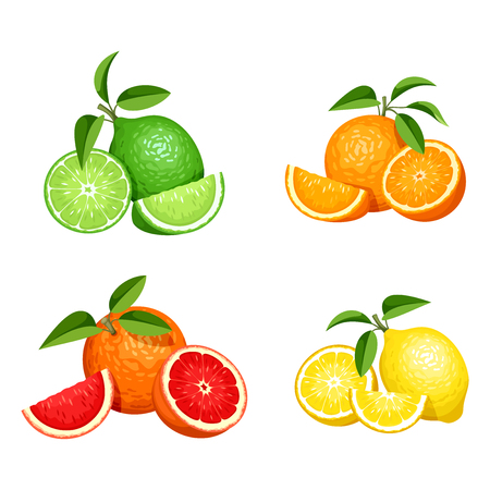 grapefruits: Vector set of citrus fruits (oranges, lemons, grapefruits and limes) isolated on a white background.