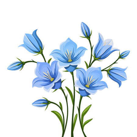Vector blue bluebell flowers isolated on a white background.