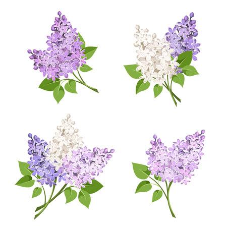 Vector Reihe von Zweigen der lila und weißen lila Blumen auf einem weißen Hintergrund isoliert.