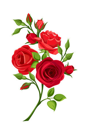 Vector branch of red roses isolated on a white background. Çizim