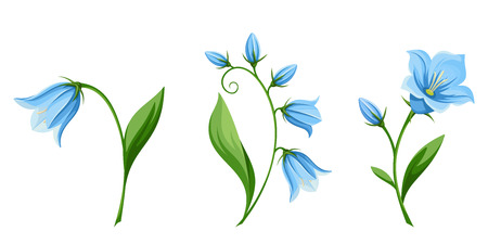 bluebell: Vector set of blue bluebell flowers isolated on a white background.