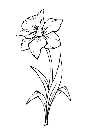 Fiore del narciso isolato su bianco. Illustrazione di arte di vettore in bianco e nero linea.