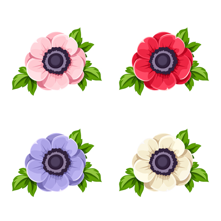 Vector set of four colorful anemone flowers isolated on a white background.