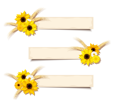 Three vector web beige banners with sunflowers, daisies and ears of wheat. Illustration