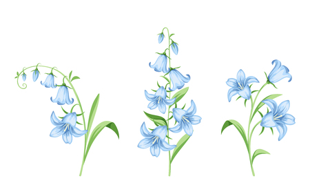 Set of vector blue bluebell flowers isolated on a white background. Stock Illustratie