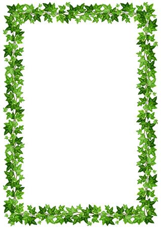 Rama tło wektor z zielonych liści bluszczu na białym tle.