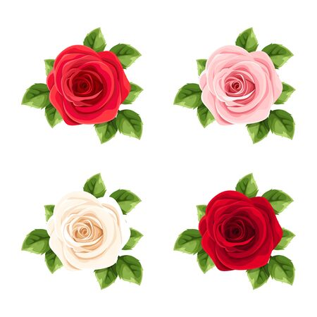 Vector set of red, pink and white roses isolated on a white background. Çizim