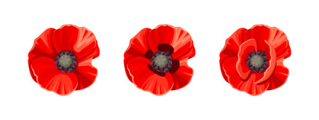 Three vector red poppies isolated on a white background. Illustration